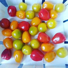 Pomodori che sembrano caramelle!  Tomatoes that look like candies :-) #colors #picture#picoftheday#colours #spring #orange#beautiful #season#red #yellow #instagood #lifeisgood #friday#weekend #instagramers #bestoftheday #instacool#bestpic #veg #vegan #love