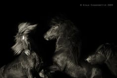 Wild Things | Gigja Einarsdottir | Flickr