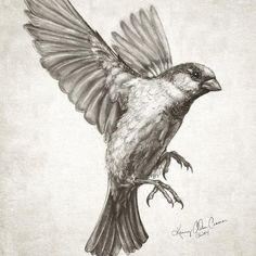 "Kenny Cramer en Twitter: ""Sparrow flying #drawing for new #artwork featuring…"