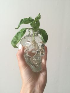 Did you know basil can grow in a glass jar? #beccajanelee