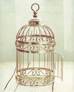 i want a bird cage!!