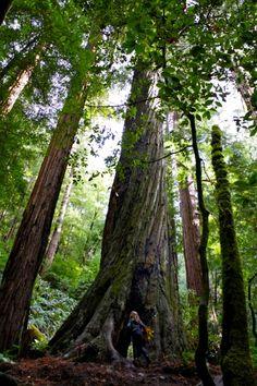 missing Muir Woods