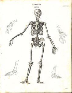 Free Skeleton Clipart - Public Domain Halloween clip art ...