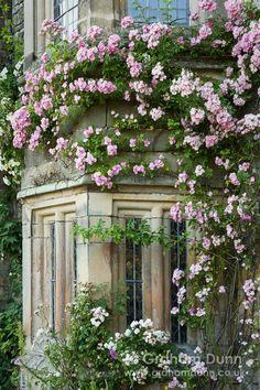 Haddon Hall ~ roses at the window