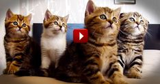 Hilarious Dancing Cats Will Make Your Day - Animals Video