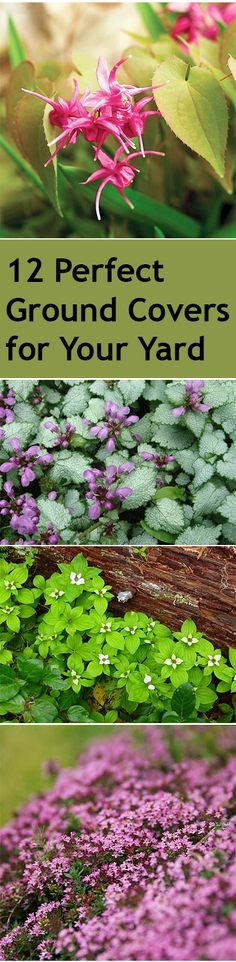 12 Perfect Ground Covers for Your Yard