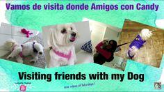 #BuenosDias Aqui el nuevo video de Candy: https://youtu.be/JSOkiD-_g6w en mi bio el link del video, muchas gracias por comentar por #Youtube por pedir saluditos! Por querernos tanto!  #newvideo with Candy Thanks for watching! Go to my bio, the video is already there! #cotondetulear #dogs #dog #pet #doglover #peober #whitedog #visitingtomyfriends #friendsanddogs
