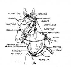 There are many styles, sizes and options to consider when ordering harness. Ask yourself these questions:What type of driving do you plan to do? Farming Harness will require different parts than Ca… Horse Harness, Horse Bridle, Breyer Horses, Draft Horses, Horse Camp, Horse Gear, Horse Information, Horse Anatomy, Horse Facts