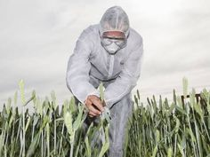 WHO Glyphosate Report Ends Thirty Year Cancer Cover Up