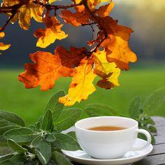Herbatka ziołowa na kaszel i gorączkę