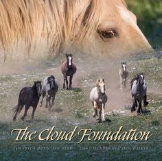 The Cloud Foundation 2014 Wild Horse Calendar  by Carol Walker