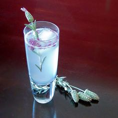 """Phrase of the day, """"Lavender Collins"""". Digging this Take on the classic Tom Collins."""
