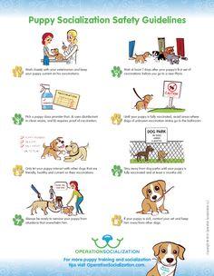 Operation Socialization Puppy Socialization Safety Guide