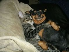 dog hugs | The ongoing feud between dogs and cats has finally ended | Petsami