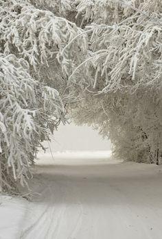 Magic winter forrest.