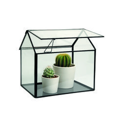 #plants #greenhouse   Dille & Kamille