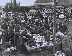 Gutters at the farlan, a Peterhead curing yard, early 1900s.