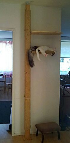 Floor to ceiling cat scratch pole