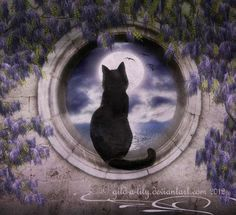 The beauty of a black cat looking at the moon Crazy Cat Lady, Crazy Cats, Black Cat Art, Black Cats, Matou, Cat Boarding, Arte Popular, Illustrations, Moon Art
