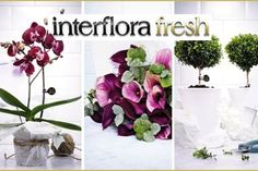 More visuals from the Interflora Fresh Launch.