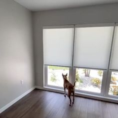 Window Coverings, Window Treatments, Budget Blinds, Custom Windows, Pet Safe, Product Offering, Playroom, Budgeting, Kids Room