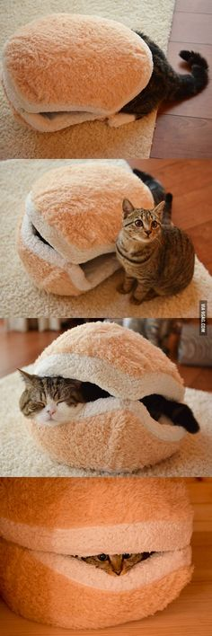I found a cute and cool idea for cat bed. A Cat Sammich looks cute and funny. Think you would like it. Do you guys have pet cats ? Share some cute stuff they have and do. If you are willing to get a cute bed for you pets then you can… Crazy Cat Lady, Crazy Cats, I Love Cats, Cute Cats, Funny Animals, Cute Animals, Animals Images, Image Chat, Here Kitty Kitty