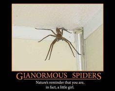 19 Reasons Why Arachnophobes Should Give Australia A Miss