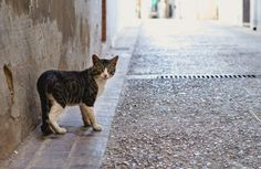 6 Common Misconceptions About Feral Cats  #cat  #cats  #kitten  #kittens  #catlover http://www.pawculture.com/lifestyle/culture/6-common-misconceptions-about-feral-cats/?utm_campaign=crowdfire&utm_content=crowdfire&utm_medium=social&utm_source=pinterest