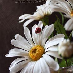 Сахарные цветы мастер класс
