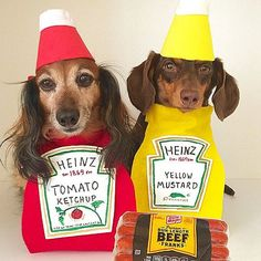 What better way to celebrate this amazing day by dressing your hot dog as a delicious hotdog! Animal Halloween Costumes, Pet Costumes, Best Dog Costumes, Funny Halloween, Weenie Dogs, Doggies, Dachshund Love, Daschund, Funny Dogs