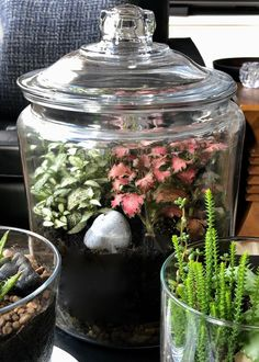 Making a Closed Terrarium: Step-by-Step Guide - Flowers wedding Terrarium succulentes Terrarium Diy, Miniature Terrarium, Closed Terrarium Plants, Terrarium Wedding, How To Make Terrariums, Making A Terrarium, Plants For Terrariums, Nerve Plant, Pot Jardin