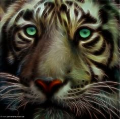 Tiger  di Parthena Neumann