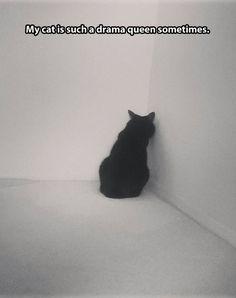 Drama cat…