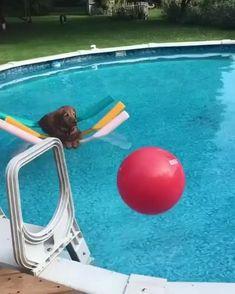 Funny Animal Videos, Cute Funny Animals, Animal Memes, Cute Baby Animals, Funny Dogs, Animals And Pets, Animal Humor, Wild Animals, Videos Funny