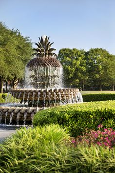 Waterfront Park, Charleston, S. via Explore Charleston Affordable Honeymoon, Best Honeymoon, Romantic Honeymoon, Honeymoon Destinations, Most Romantic, Honeymoon Ideas, Fleet Landing, Hiking Photography, Kayak Tours
