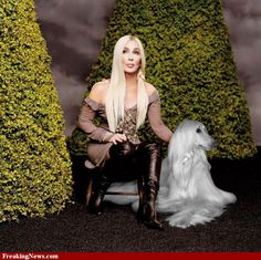 Cher and her Pet Afghan Hound Dog Photos, Dog Pictures, Music Pictures, Celebrity Dogs, Afghan Hound, Hound Dog, Whippet, Happy Dogs, Beautiful Dogs