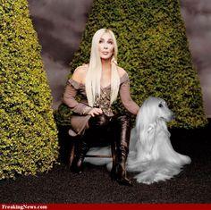 Cher Afghan Hound