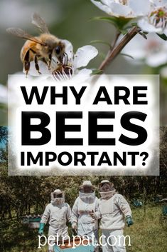 Why Are Bees Important? Why Do We Need Bees?  #bees #beekeeping #pets #animals #food #honey