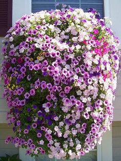 Bloom Master Australia - Simply the finest, most productive hanging baskets and… Plants For Hanging Baskets, Hanging Flower Baskets, Flower Planters, Hanging Planters, Petunia Hanging Baskets, Container Flowers, Hydrangea Landscaping, Floating Garden, Plant Basket