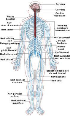 Les Systèmes vitaux du corps humain                                                                                                                                                                                 Plus