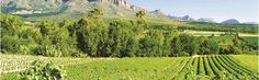Cape Wine Route Cape Town, Vineyard, Wine, Outdoor, Outdoors, Vine Yard, Vineyard Vines, Outdoor Living, Garden