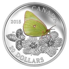 1 ounce Fine Silver Coloured Coin – Butterflies of Canada : Giant Sulphur – Mintage: Canadian History, Canadian Memes, European History, American History, Canadian Things, Foreign Coins, Flower Stamp, World Coins, Rare Coins