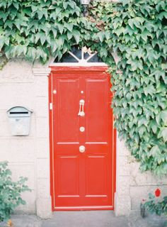 red door | green ivy | jen huang photo