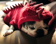 Fancy - Dog Dragon Hoodie