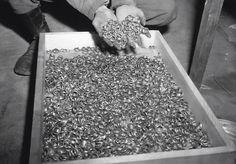 Estas são as alianças retiradas dos judeus nos campos de concentração, durante a Segunda Guerra Mundial. Quantas histórias de amor devem ter acabado?