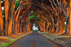 Morning Sunlit Tree Tunnel