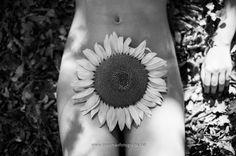 La flor de la vida - null