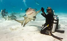 """Shark High Five by Paul Spielvogel. """" It's not everyday that we see a smiling shark give a scuba diver a high-five. Eli Martinez, editor of Shark Diver Magazine, was diving in the Caribbean Sea, off. High Five, Oceans Of The World, We Are The World, Shark Week, Hai Shirt, Animal Pictures, Funny Pictures, Hilarious Photos, Funny Pics"""