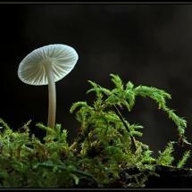 mushroom & moss