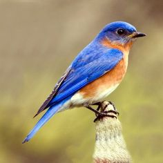 It is said that bluebirds can bring us happiness and miracles...I have reason to believe it! :)